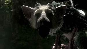 If Sony Cancels The Last Guardian It Will Let You Know VG247
