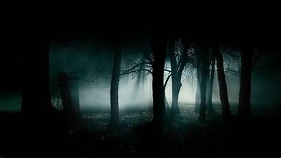 Dark Forest Laptop Desktop Backgrounds Mobile Popular