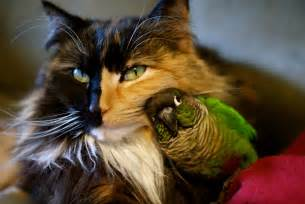 bird for cats 15 of the strangest cat laws made purrfect cat breeds