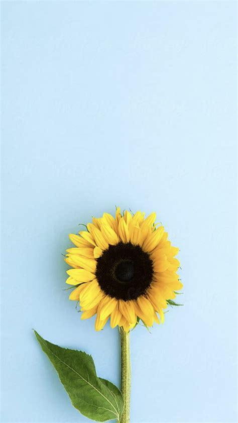 aesthetic wallpaper bunga matahari tumblr hd wallpapershit