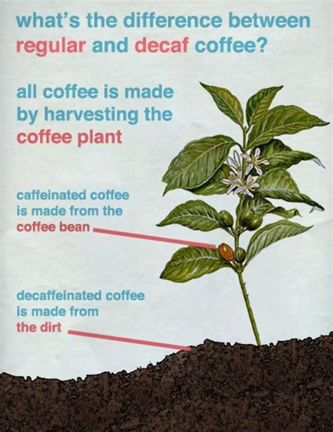 How decaf coffee is made   Meme Collection