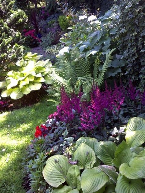 ferns for shade garden shade garden hostas ferns begonias astilbes ivy landscaping pinterest gardens ferns