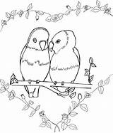 Goldfinch Coloring Eastern Birds Colour Comments Colouring Bird Template Coloringhome sketch template