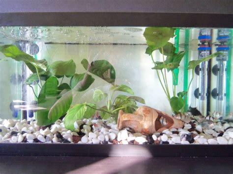 thermo eheim chauffage aquarium haut de gamme chauffage aquarium