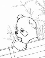 Panda Coloring Pages Printable Pandas Realistic Sheets Drawing Bear Animal Adults Bamboo Anime Babies Getdrawings Getcolorings Osaka Houses Albanysinsanity Eat sketch template