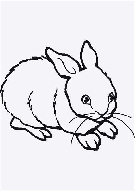 malvorlagen tiere kostenlos ausdrucken kinderbilderdownload