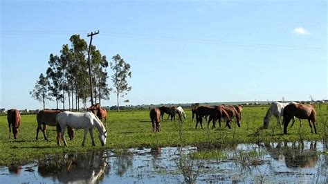 horses domesticated animals field