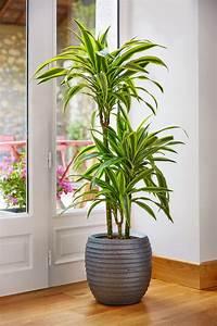 Fausse Plante Verte : fausse plante verte interieur photos de magnolisafleur ~ Teatrodelosmanantiales.com Idées de Décoration