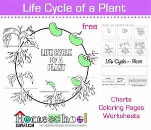 38 Best Plentiful Plant Unit Images On Pinterest
