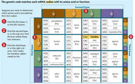 genetic code worksheet