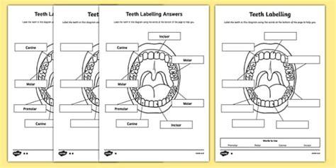 teeth labeling worksheet teacher