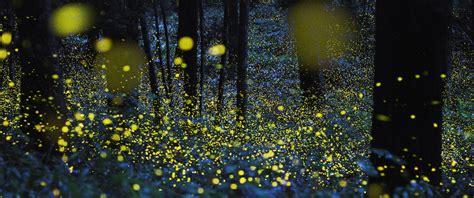 Perchè Le Lucciole Si Illuminano by Inseguendo Le Lucciole Per Trovare Biodiversit 224 Ecobnb