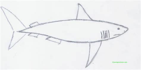 draw  shark step  step  kids