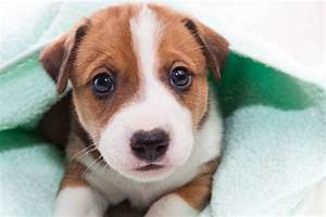 how to avoid top 6 dog diseases and injuries