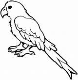 Parrot Coloring Pages Bird Animals Macaw Drawing Animal Clipart sketch template
