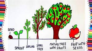 How To Draw Life Cycle Of A Tree
