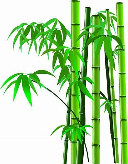 Bamboo Clipart Tree Transparent Cartoon Background Plant