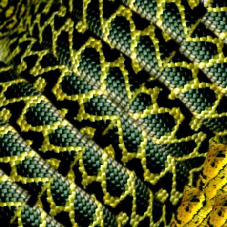 printable snake templates carla maria smith