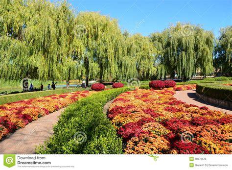 botanic gardens chicago fall mums at chicago botanic garden stock image image of