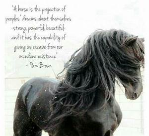 Beautiful horse and beautiful quote!! | Horse-crazy ...