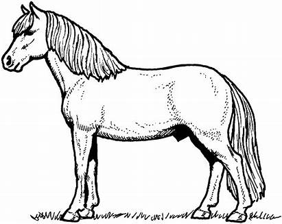 Horse Coloring Pages Weneedfun Ads