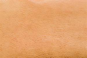 Anatomy Of The Epidermis With Pictures