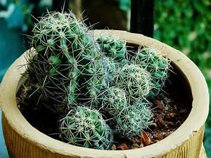 Comment Entretenir Un Cactus : comment rempoter un cactus ~ Nature-et-papiers.com Idées de Décoration