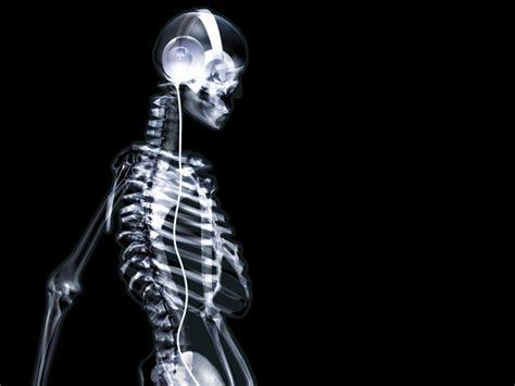 Animal Skeleton Wallpaper - wallpapers skeleton wallpapers