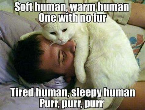 Soft Kitty Meme - soft kitty song variation that guy sure has a lot of facial hair cats kitties pinterest