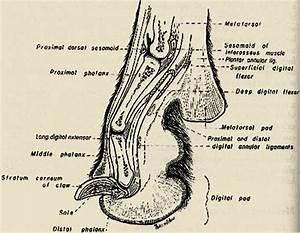 Anatomy Dog Paw Pads