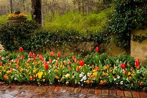 Tulpen Im Topf In Der Wohnung : tulpenzwiebeln im topf pflanzen tulpen im topf so f hlen sie sich rundum wohl tulpen pflanzen ~ Buech-reservation.com Haus und Dekorationen