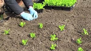Endiviensalat Pflanzen Setzen : salat pflanzen 10 fakten und tipps f r den garten salatanbau youtube ~ Whattoseeinmadrid.com Haus und Dekorationen