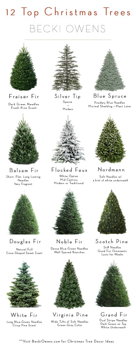 all about christmas trees guide decoratingbecki owens