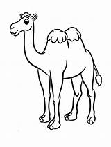 Camel Coloring Pages Animal Animals Recommended sketch template