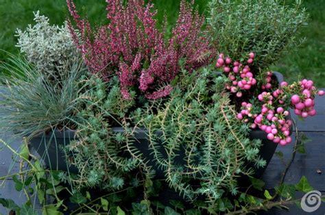 fiori per esterno invernali le fioriere invernali per il balcone e il davanzale casa