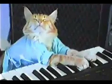Cat Playing Piano Meme - funny songs on youtube list of viral songs on the internet