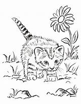 Kitten Coloring sketch template