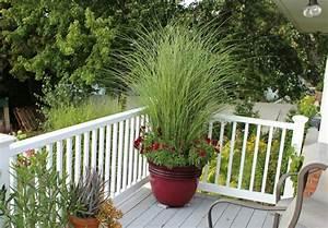 Gräser Für Balkonkasten : gr ser pflanzen h bsche arten f r innenbereich balkon ~ Michelbontemps.com Haus und Dekorationen