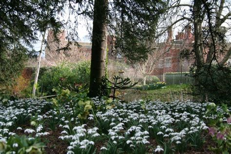 snowdrop gardens snowdrops at hodsock priory hodsock priory