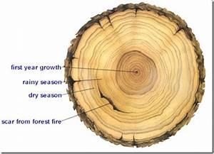 Testimonies And Tree Rings