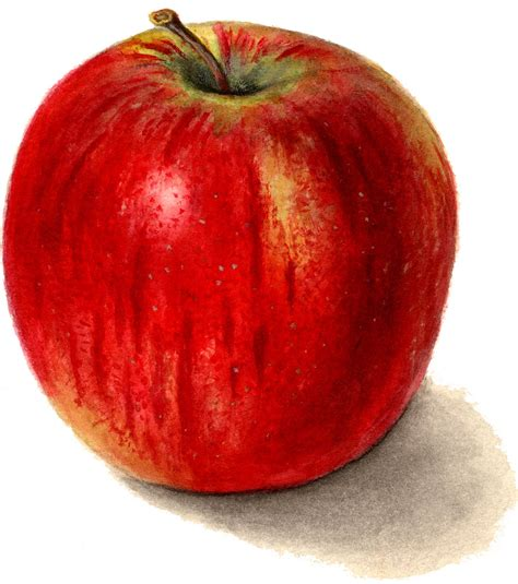 7 Apple Images Clip Art! - The Graphics Fairy