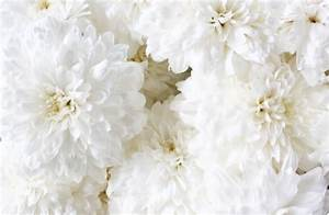 White Flowers Tumblr 13 Background Wallpaper ...