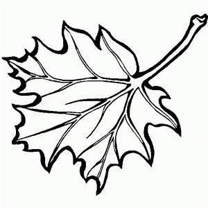 Feuilles D Automne à Imprimer : les meilleurs coloriages d 39 arbre ~ Nature-et-papiers.com Idées de Décoration