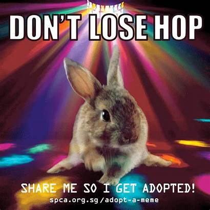 Meme Adopt Animals Shelter Animal Adoption Spread