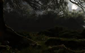 Misty Forest at Night