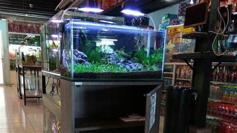 inspirasi aquarium ikan hias kata kata mutiara