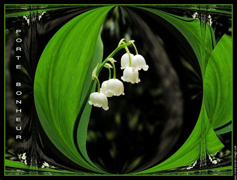 1000 images about le muguet of the valley on