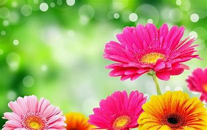 Bright Flower Wallpapers Mobile Android Desktop Pc