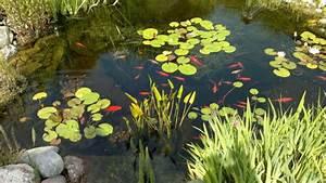 Goldfisch Haltung Im Teich : goldfische im teich oder aquarium halten ~ A.2002-acura-tl-radio.info Haus und Dekorationen