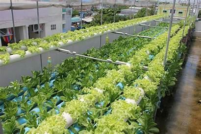 Rooftop Hydroponic Garden บไซต เว ไป Farm
